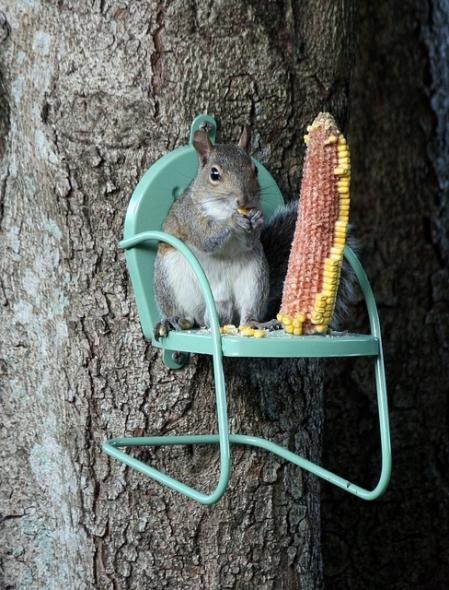 écureuil chaise