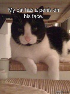 chat pénis